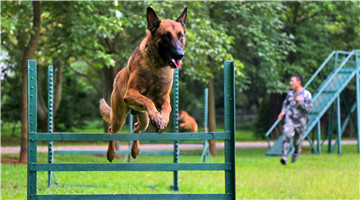 Military working dog jumps through burning obstacle